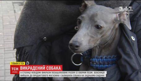 Упродовж трьох днів у Києві шукали собаку, якого злодії вкрали разом із позашляховиком