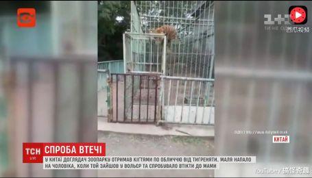В Китае тигренок напал на работника зоопарка