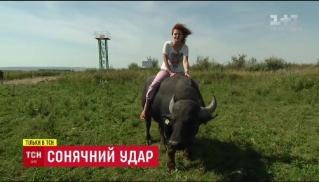 Из-за изменений климата Украина стала домом для необычных зверей