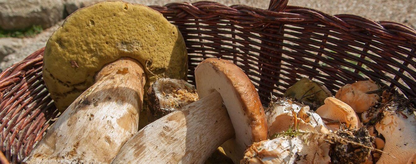 На Харьковщине пятеро отдыхающих отравились грибами
