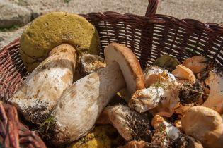 Сезон отравлений начался раньше: грибы из леса массово укладывают украинцев на койки реанимаций