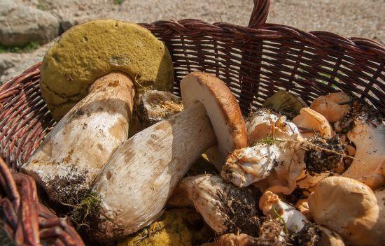 На Харківщині п'ятеро відпочивальників отруїлися грибами