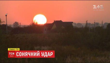 Солнечный удар: из-за потепления в Украине поселились необычные звери