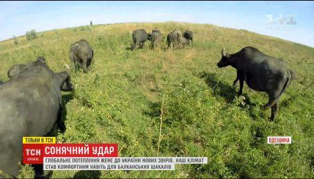 Глобальное потепление гонит в Украину новых причудливых зверей
