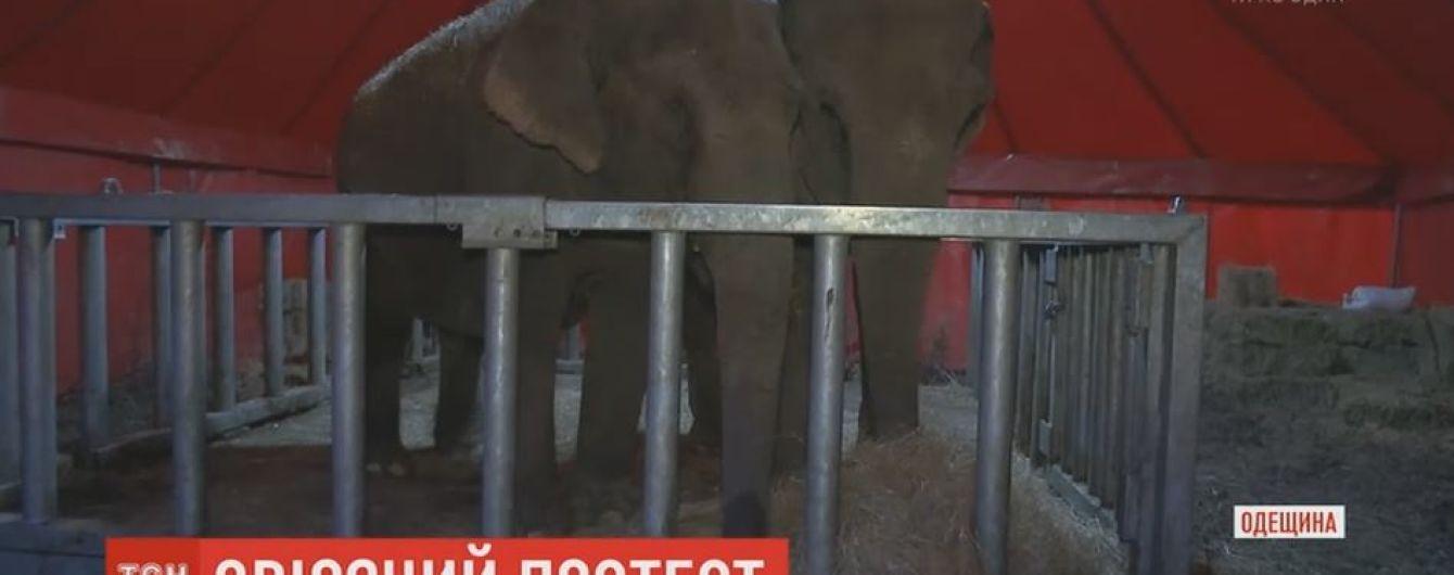 Зоозахисники з бійкою відстоювали права тварин з пересувного цирку в Чорноморську