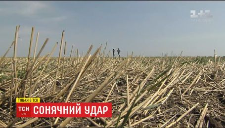 Из-за глобального потепления в Украине изменились условия и места выращивания сельскохозяйственных культур