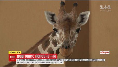 Уникального маленького жирафика показали в частном зоопарке