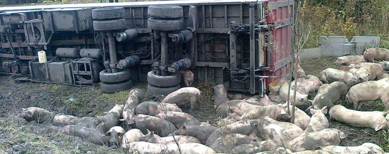 Свинство на дорозі: на Полтавщині перекинулася фура із поросятами
