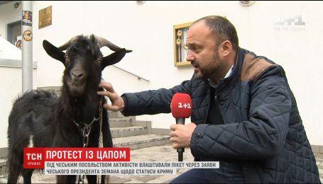 У відповідь на заяву Земана активісти привели під Чеське посольство чорного цапка