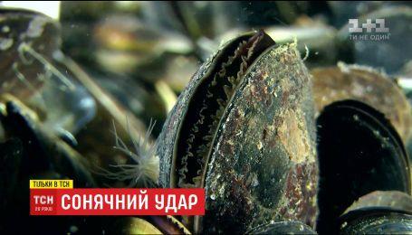 ТСН покажет, какую экзотику из дальних стран можно найти в украинской акватории