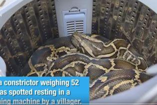 """""""Пригрела"""" змею в стиральной машине. Китаянка случайно обнаружила дома огромного удава"""