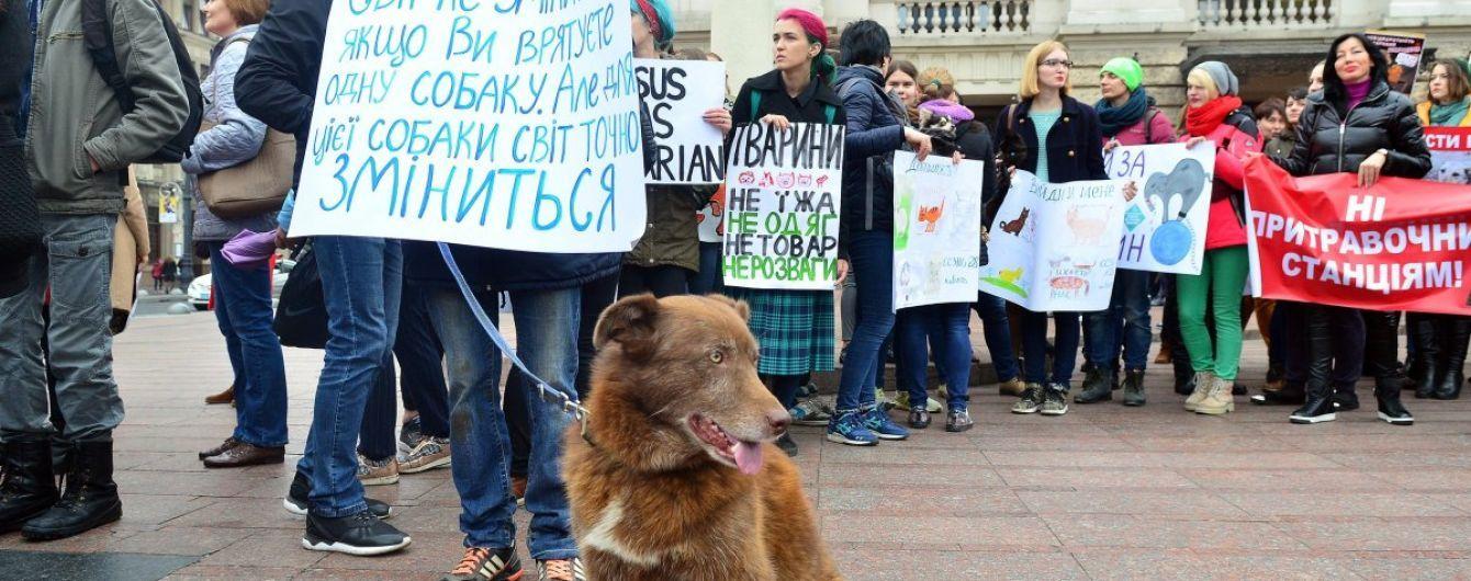 Одесский суд впервые в истории Украины арестовал мужчину за жестокое обращение с животными