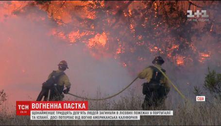 Власти Португалии просят о международной помощи в борьбе с лесными пожарами