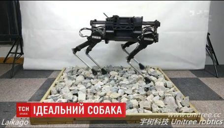 Китайські інженери розробили робота-собаку, яким можна керувати через Wi-Fi