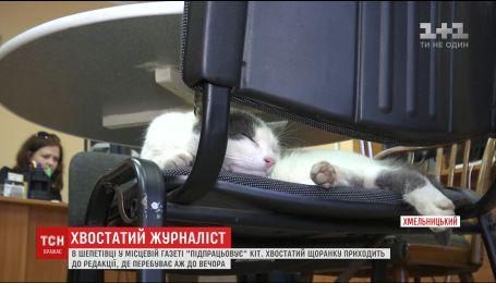 """В Шепетовке кот """"подрабатывает"""" в местной газете"""