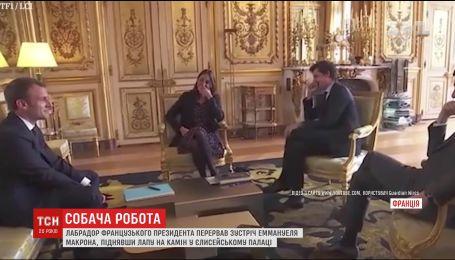 Лабрадор французского президента прервал деловую встречу в Елисейском дворце