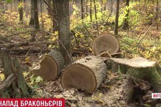На Житомирщине нелегальные охотники на дуб обстреляли лесников