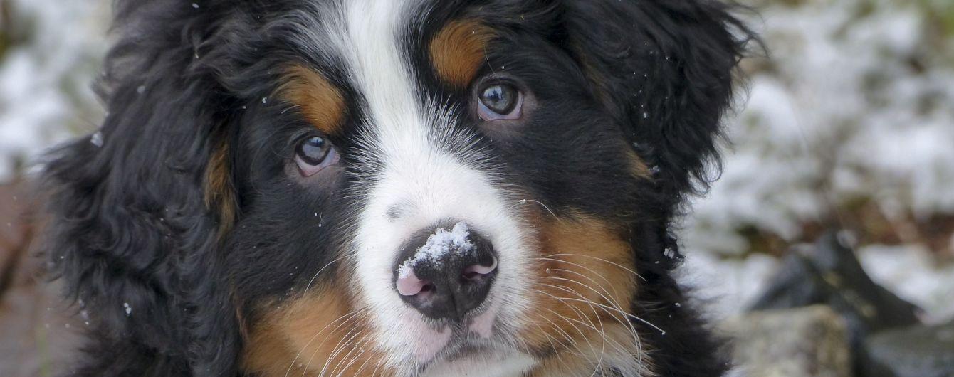 Собачья верность: в США животное после смерти владелицы не хотело уходить с кладбища с новыми хозяевами