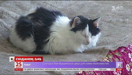 В Україні можуть почати реєстрацію домашні та безпритульних тварин