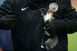 "Белка ворвалась на поле перед матчем ""Манчестер Сити"" и ""завела"" аккаунт в Twitter"