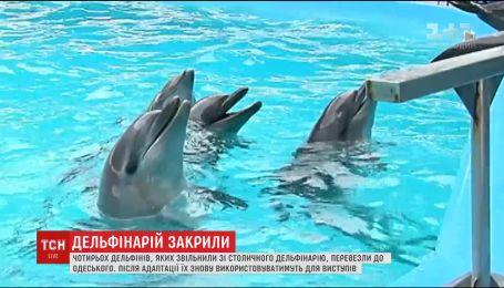 Киевский дельфинарий закрыли за жестокое обращение с млекопитающими
