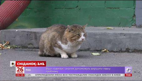 Тотальна реєстрація домашніх і вуличних тварин: за і проти