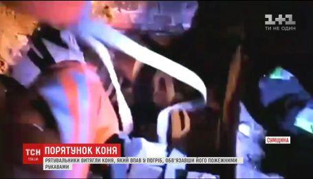На Сумщині рятувальники пожежними рукавами витягли з погреба коня