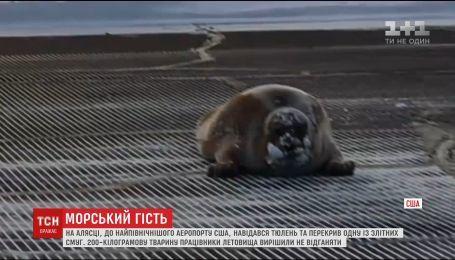 В северном аэропорту США 200-килограммовый тюлень перекрыл дорогу самолетам