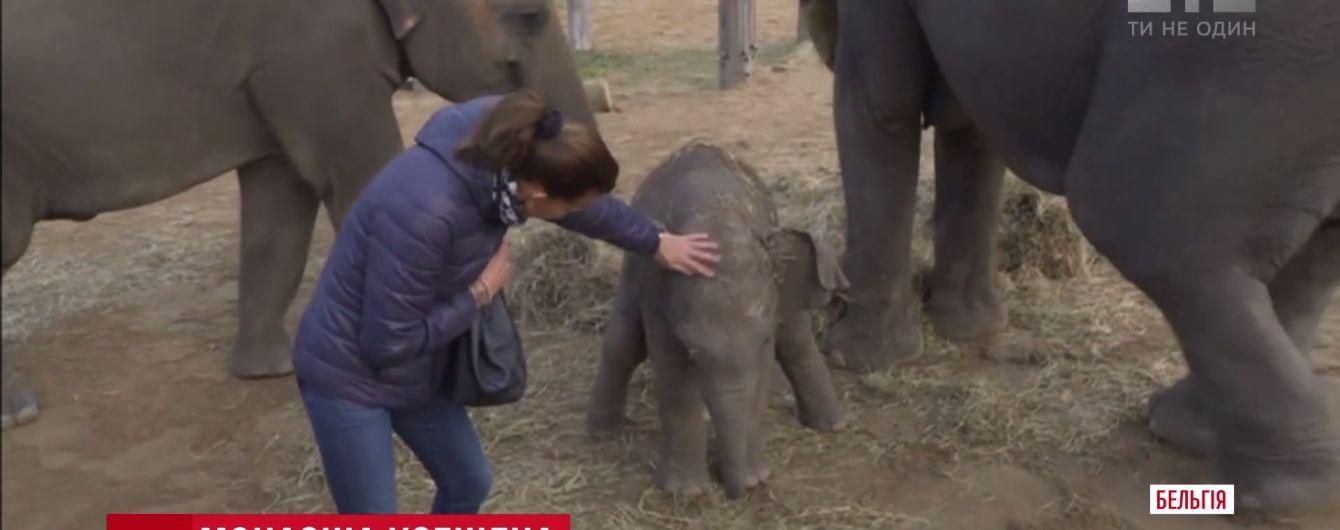 """Принцеса Монако стала """"хрещеною"""" для слоненяти"""