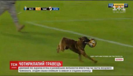 В Боливии во время футбольного матча дворовый пес отобрал мяч у игроков