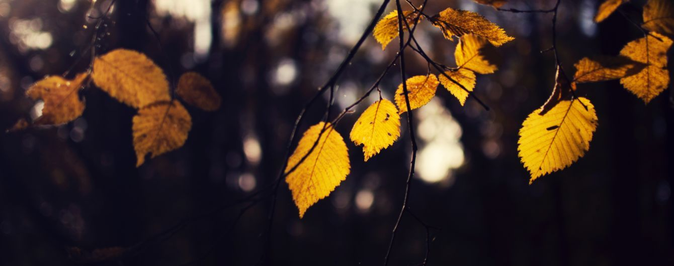 На Чернігівщині вдалося знайти загублену у лісі дівчинку
