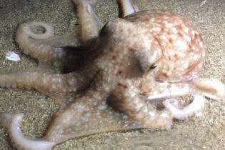 Десятки осьминогов выползли на берег и напугали жителей Уэльса