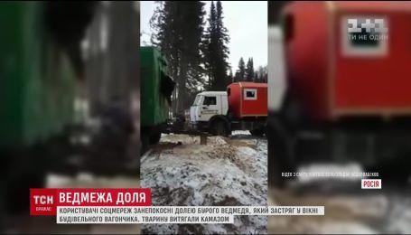 Врятували чи зарізали: юзерів наполохало відео порятунку ведмедя на півночі РФ