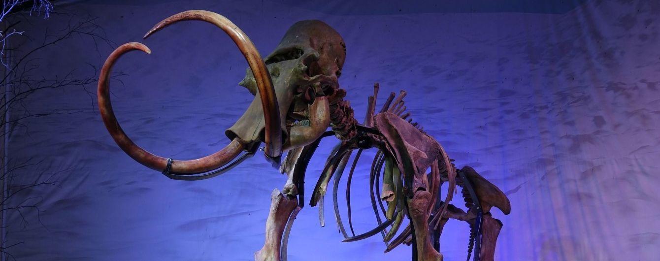 У Франції за рекордну суму з молотка пішов скелет мамонта