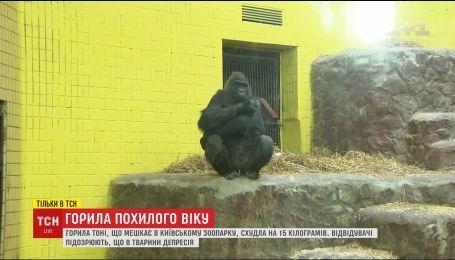 Тони - в депрессии: посетители и работники киевского зоопарка обеспокоены состоянием 43-летней гориллы