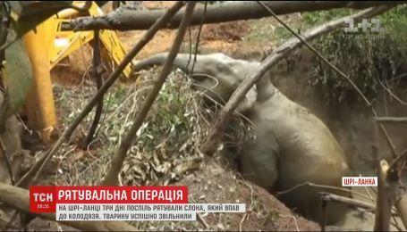 На Шри-Ланке три дня спасали слоненка из колодца
