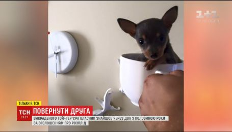У Києві власник викраденого той-тер'єра знайшов собаку через більше двох років пошуків