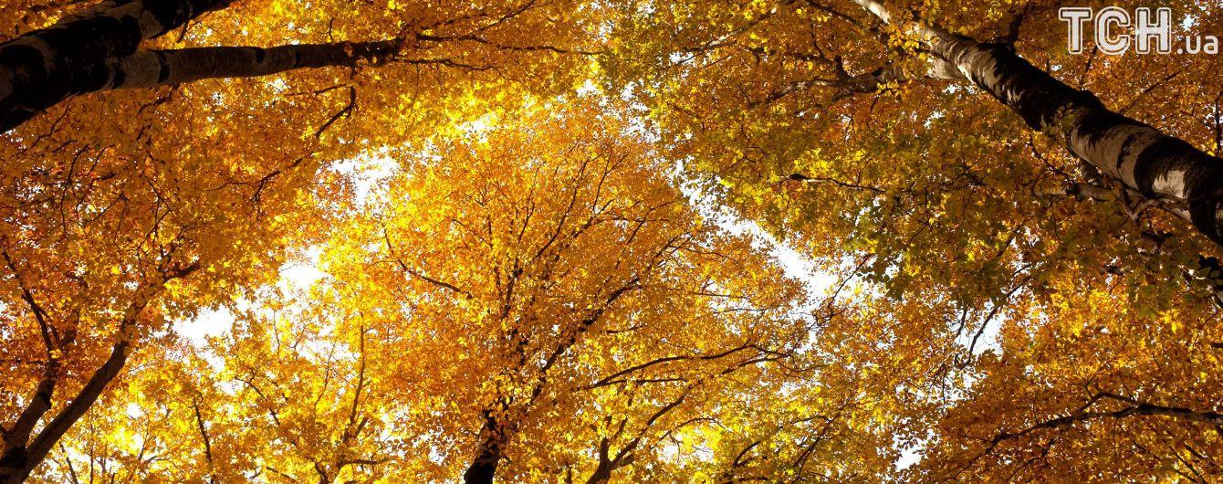 Погода на неділю: в Україну повертається комфортна осінь