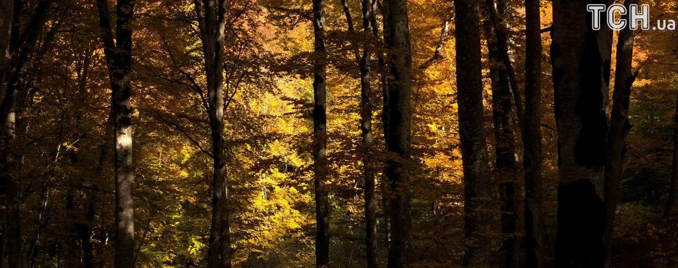 Вторник в Украине будет без осадков. Прогноз погоды на 7 ноября
