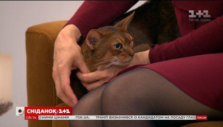 Суддя Юлія Скабовська розказала про особливості котячих виставок