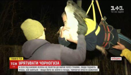 На Киевщине с тяжелой техникой селяне спасали от холода аиста