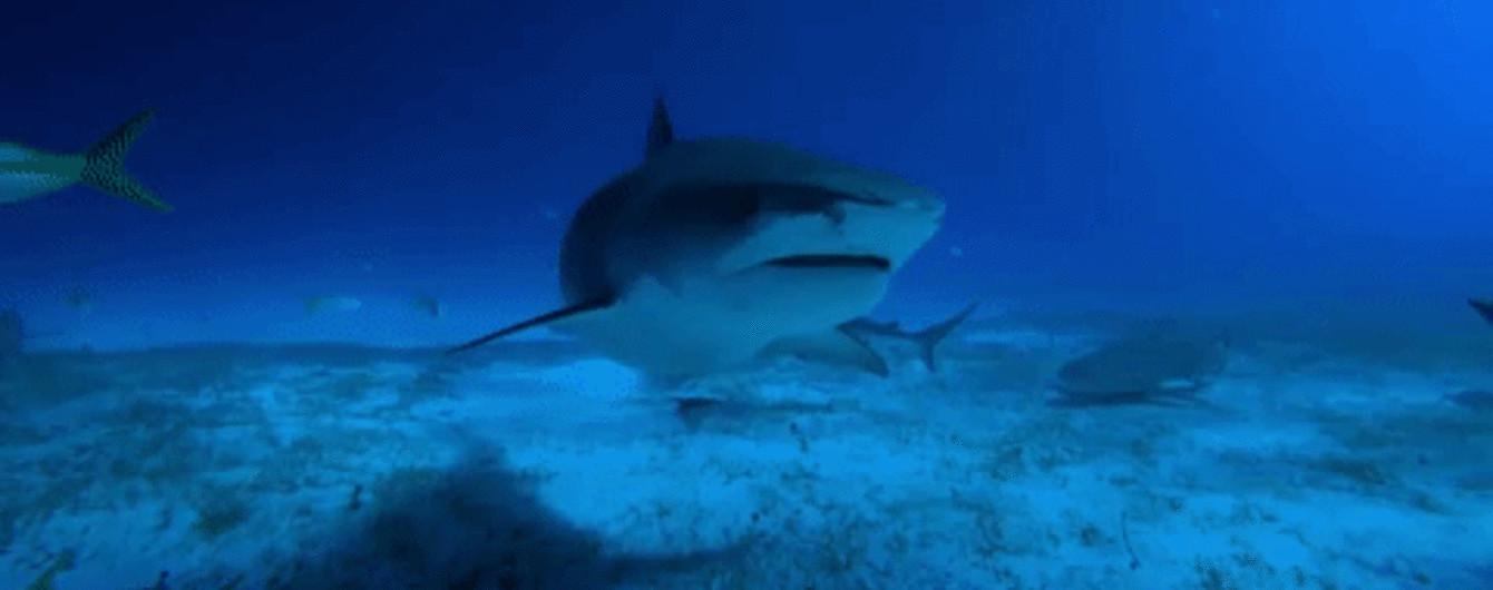 Неймовірне відео GoPro зі зграєю акул та конфуз ведучої, яка оголила сідниці в ефірі. Тренди Мережі