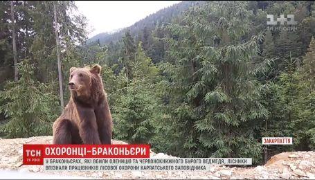 Работников Карпатского заповедника подозревают в охоте на краснокнижных животных