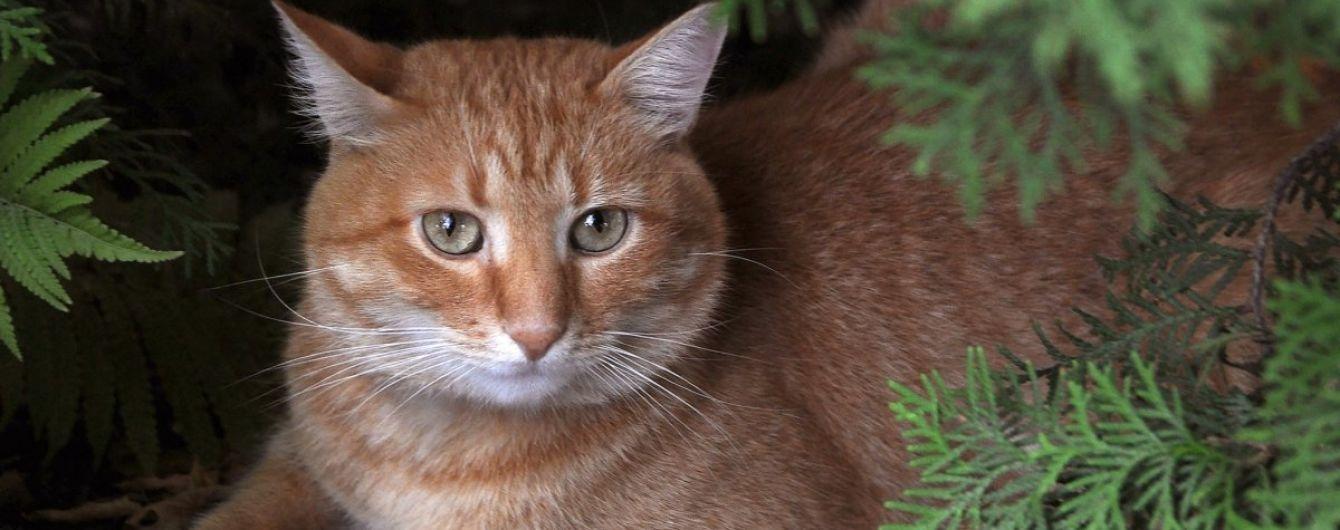 На Харьковщине кот случайно задушил 3-месячного младенца