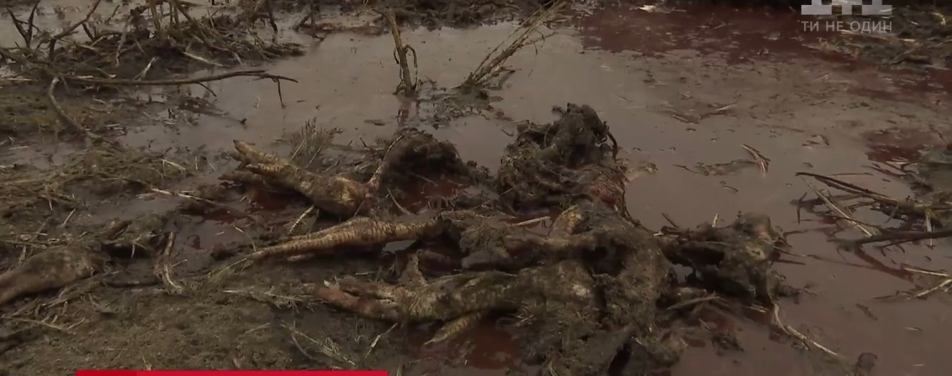 """""""Найбільше жахіття з побаченого"""": під Києвом серед поля викинули 160 тонн мертвої курятини"""