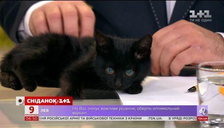 """Кошенята з притулку """"Сіріус"""" шукають сім'ю"""