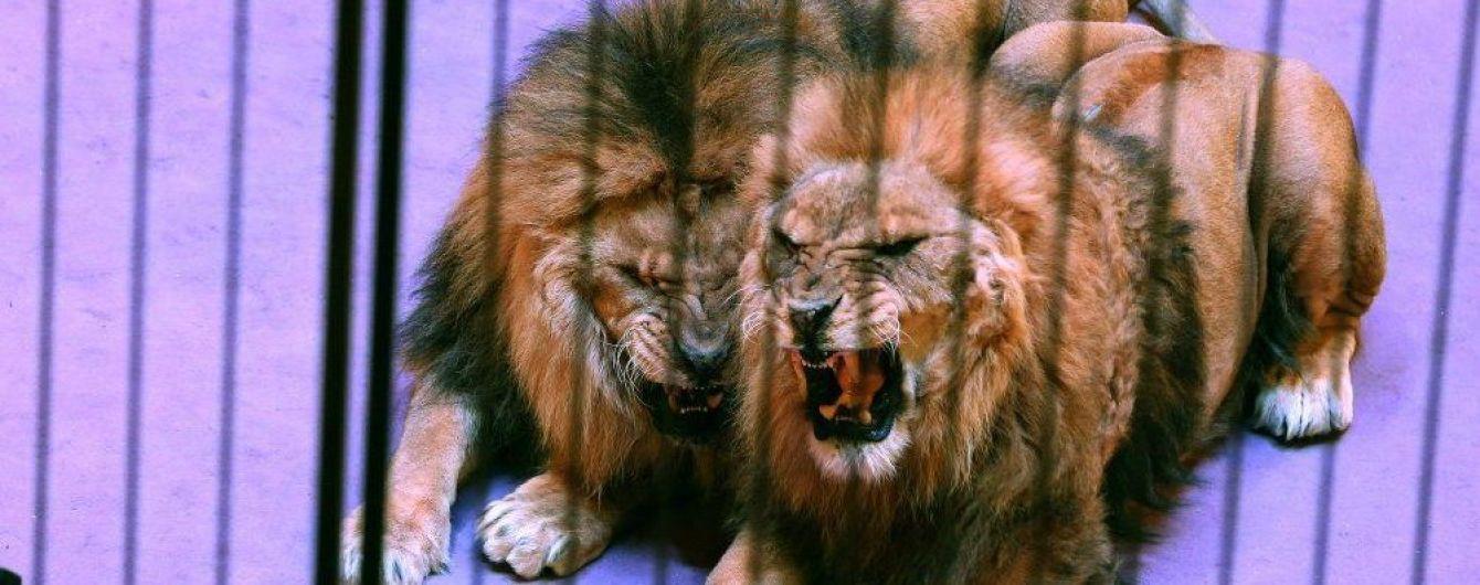 Португалія заборонила використання диких тварин у цирках