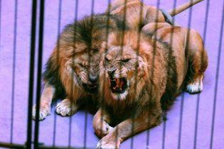 Стало відомо, коли в Україні можуть заборонити цирки з тваринами