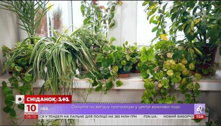 Як розташувати рослини на підвіконні взимку