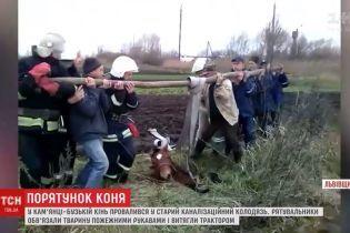 На Львовщине трактором и пожарными рукавами вытащили коня из канализационного люка